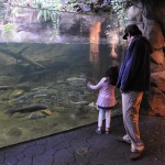 Local Lessons – The Oregon Zoo New Exhibit