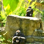 Our Ordinary Visit to the Cincinnati Zoo
