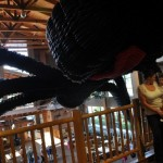 Great Wolf Lodge – Howloween Activities