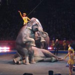 Portland Family Fun: Ringling Bros. and Barnum & Bailey® Circus