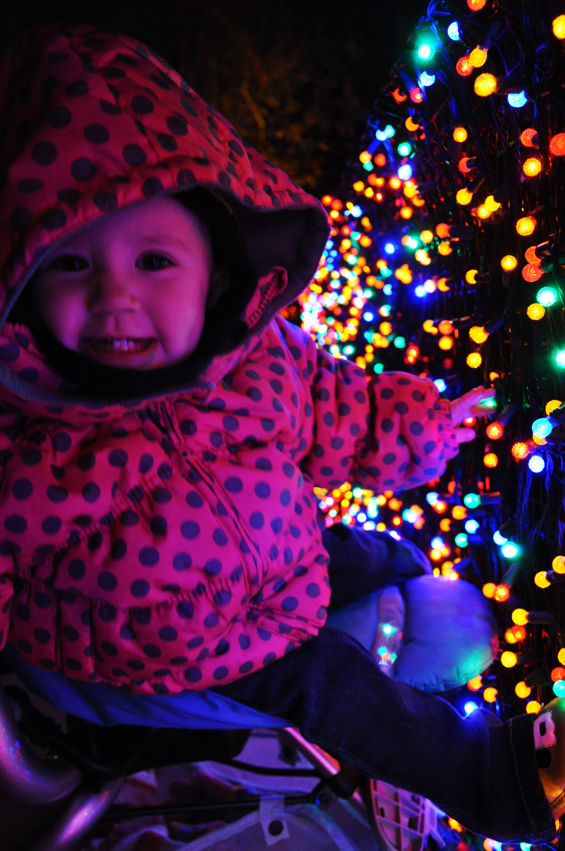 brooklin zoolights