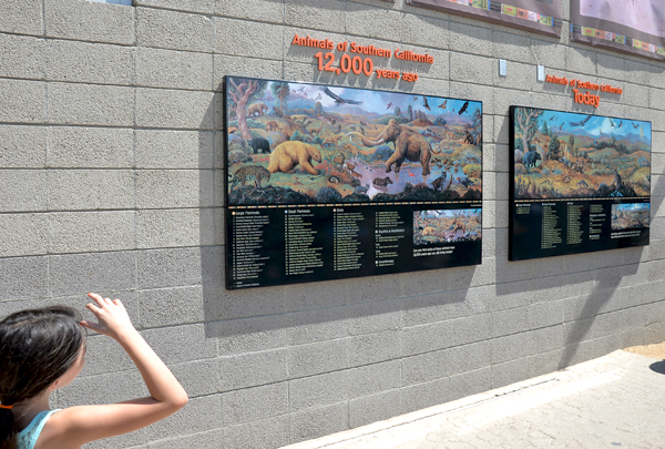 san diego zoo pictures of animals then and now