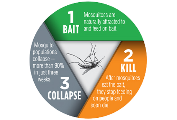 HOW TO KILL A MOSQUITO ALLCLEAR BAIT KILL