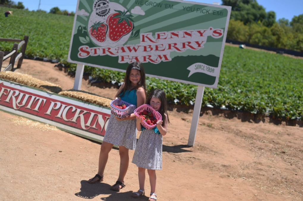 Kennys strawberry farm u pick temecula socal california