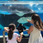 SoCal Family Travel – Behind The Scenes At Sea World San Diego